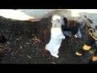What a cute little cat.. #cat #animal #pet #meow #milk #fb #facebook #video what do you