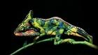 incroyable body painting de deux femmes en caméléon par Johannes Stotter